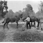 Mules and canal boat at a lock