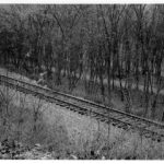 After the canal ceased to carry boat traffic, it was not long before trees and other vegetation took hold in the prism. This photograph exemplifies the close proximity in which the railroad and canal operated. Credit: Western Maryland Railroad Collection, Chesapeake & Ohio Canal National Historical Park