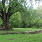 This large tree provides shade and invites you to enjoy a picnic under it's branches. Credit: Chesapeake & Ohio Canal National Historical Park