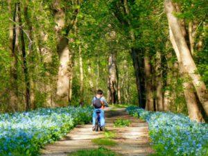 "April's Winner ""Admiring the Bluebells"", Photo by MJ Clingan"