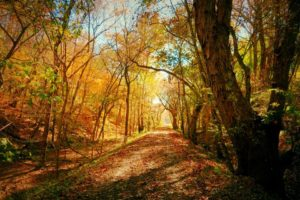 """October's Winner """"On the trail near mile marker 99"""", Photo by MJ Clingan"""