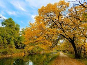 "November's Winner ""Canal Gold"", Photo by MJ Clingan"