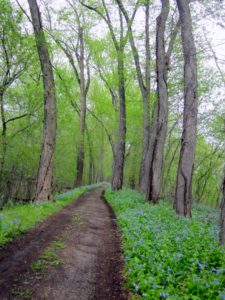 April on the Towpath near Mile 105 - Rali Roesing