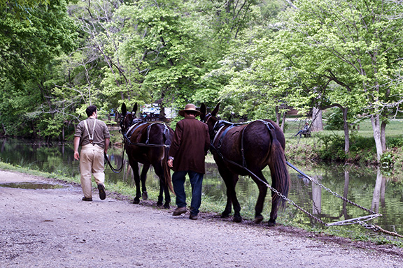 Mules pull the Mercer canal boat
