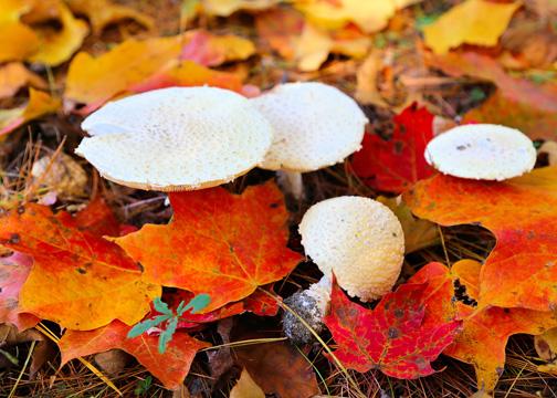 Mushrooms Near Mile Marker 99 - MJ Clingan
